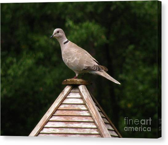 At The Top Of The Bird Feeder Canvas Print