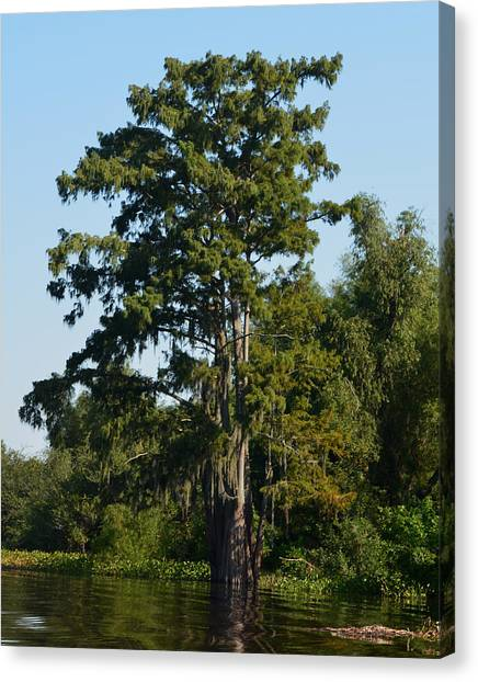 Atchafalaya Basin Canvas Print - Atchafalaya Basin 11 by Maggy Marsh