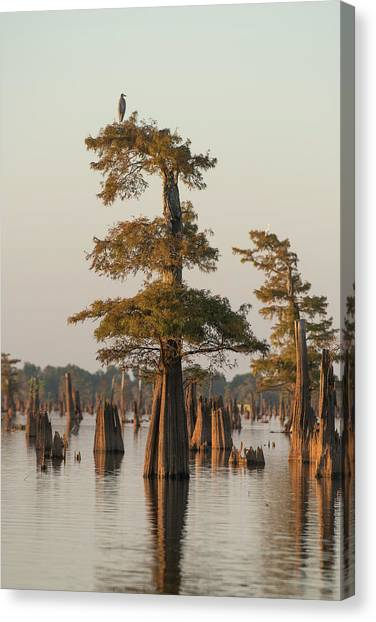 Atchafalaya Basin Canvas Print - Atchafalaya Basin by Christian Heeb