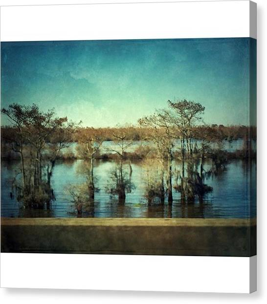 Swamps Canvas Print - Atchafalaya #louisiana  #swamp by Joan McCool