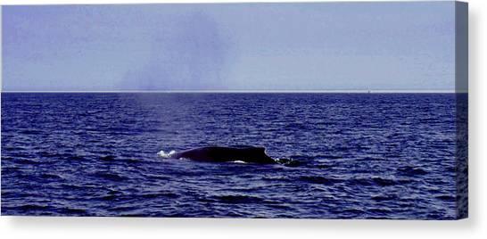 Athena's Whale Canvas Print