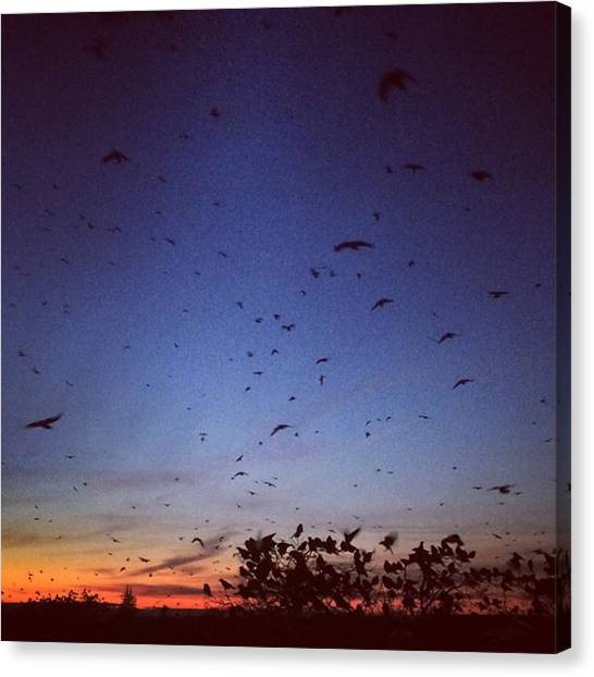 Iowa Canvas Print - Attack Of The Birds by Mary Kenney