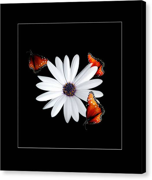 Attraction Canvas Print by Richard Gordon