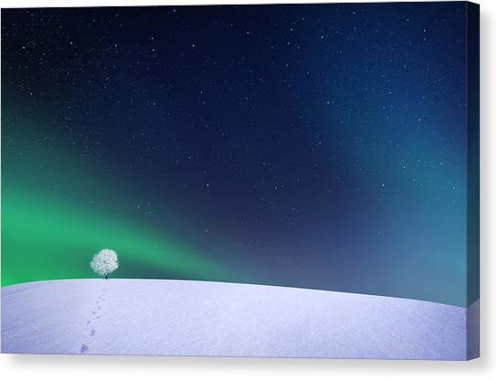 Winter Forest Canvas Print - Aurora by Bess Hamiti
