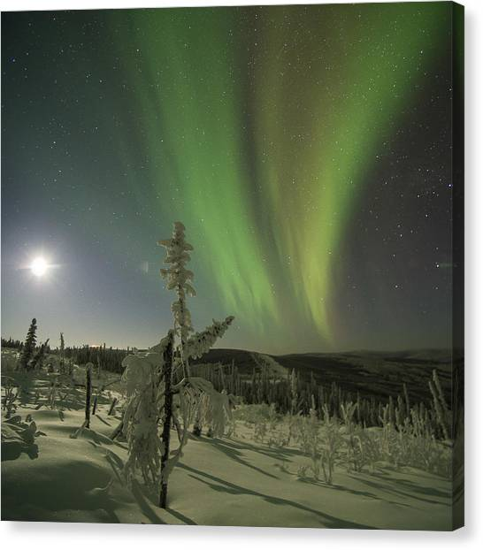 Aurora In The Hoar Frost Canvas Print