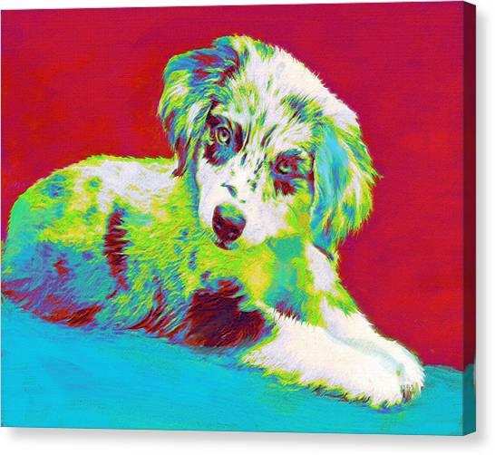 Aussie Puppy Canvas Print