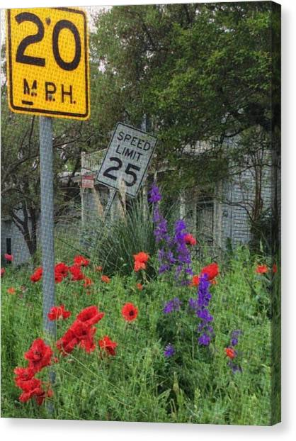Austin 2015 Canvas Print by Cooky Goldblatt