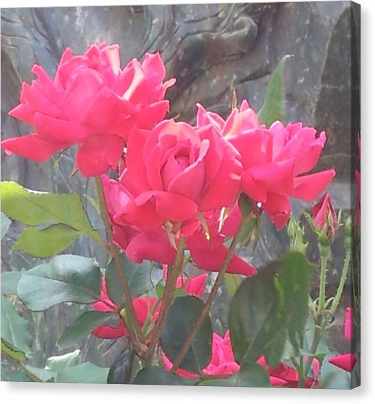 Austin Roses Canvas Print