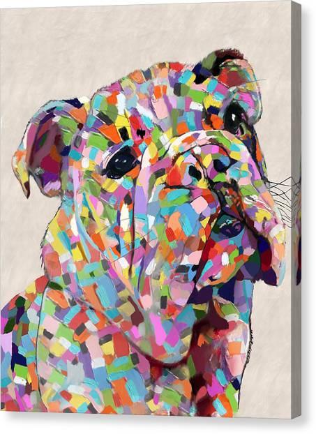 Australian Bulldog  Canvas Print