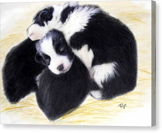 Australian Cattle Dog Puppies Canvas Print