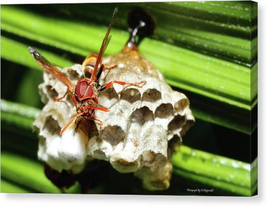 Australian Papper Wasp 772 Canvas Print