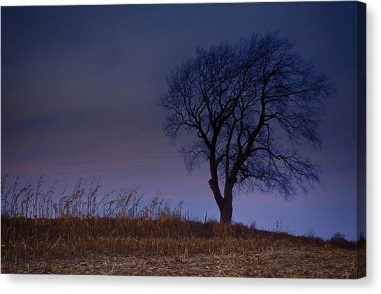 Autum Tree Canvas Print