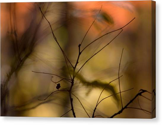 Autumn Abstract Canvas Print
