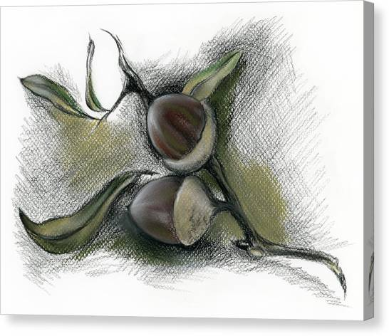 Canvas Print featuring the drawing Autumn Acorns On An Oak Twig by MM Anderson