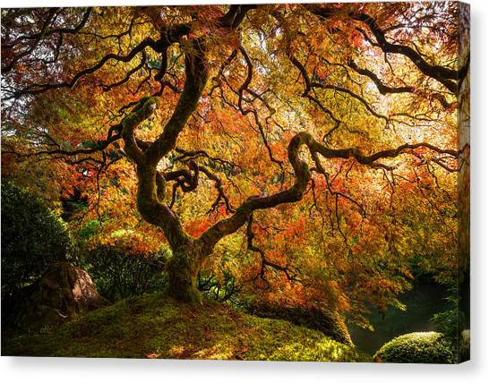 Autumn Arrival Canvas Print