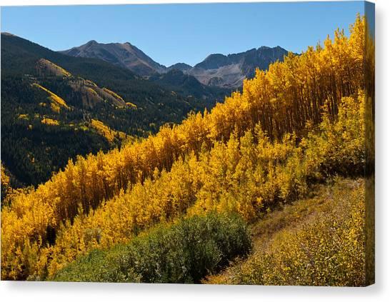 Autumn Aspen Near Castle Creek Canvas Print
