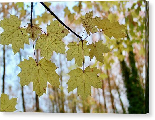 Autumn Beauty Canvas Print