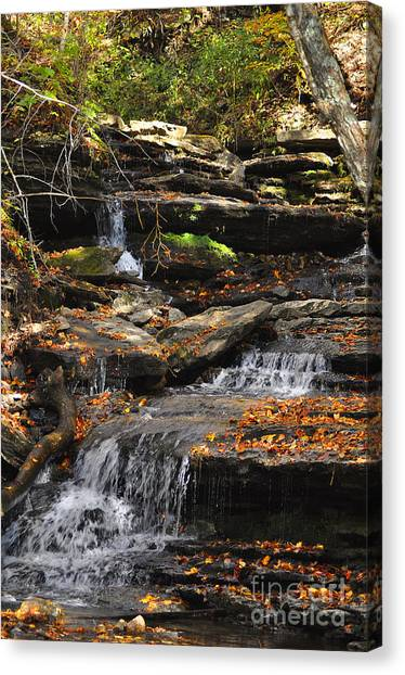 Autumn Brook Canvas Print