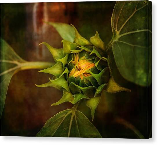 Susan Canvas Print - Autumn Bud by Susan Capuano