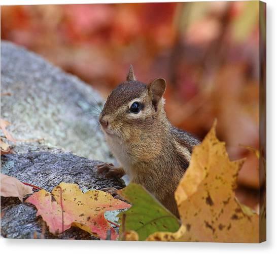 Autumn Chipmunk Canvas Print