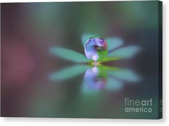 Autumn Clover Droplet Canvas Print
