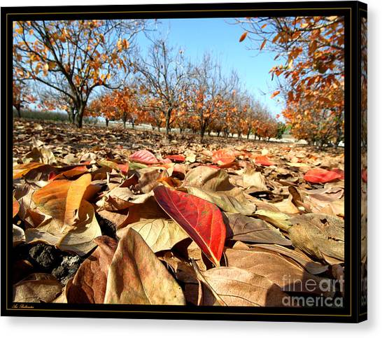 Autumn Colors 04 Canvas Print