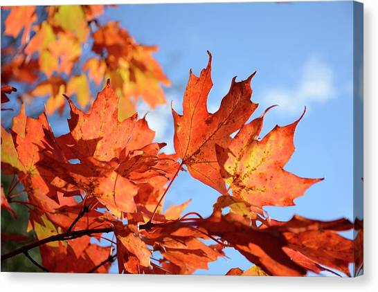 Canvas Print featuring the photograph Autumn Colors 2 by Angie Tirado