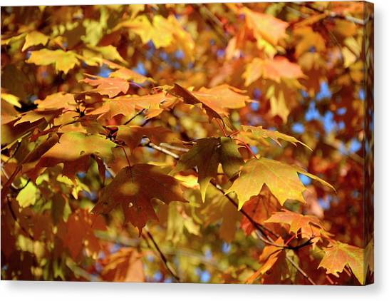 Canvas Print featuring the photograph Autumn Colors 3  by Angie Tirado