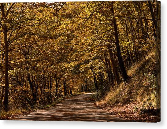 Canvas Print featuring the photograph Autumn Colours by Nikos Stavrakas