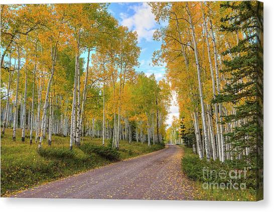 Canvas Print featuring the photograph Autumn Country Road by Spencer Baugh