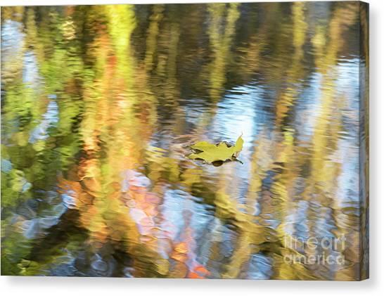 Autumn Drift Canvas Print by Tim Gainey
