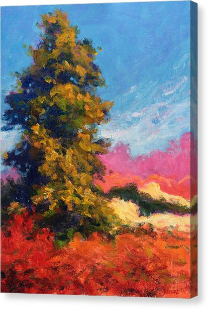 Autumn Evergreen  Canvas Print