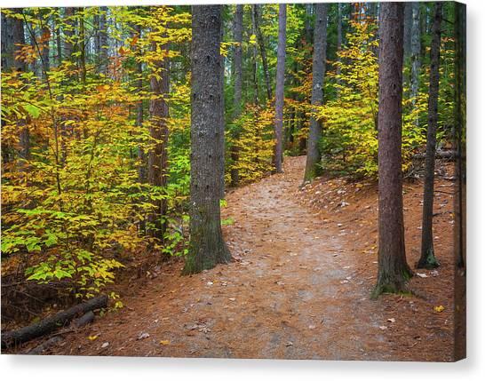 Autumn Fall Foliage In New England Canvas Print