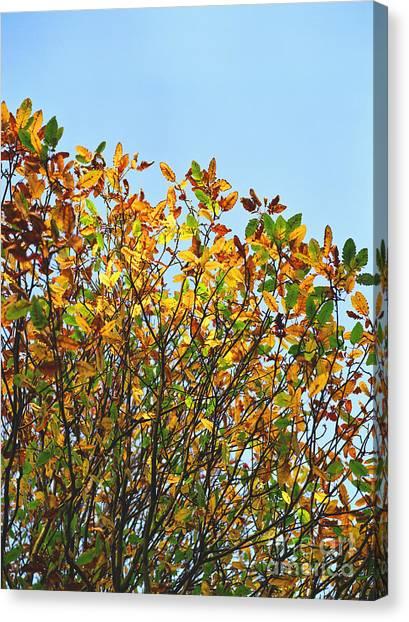 Autumn Flames - Original Canvas Print