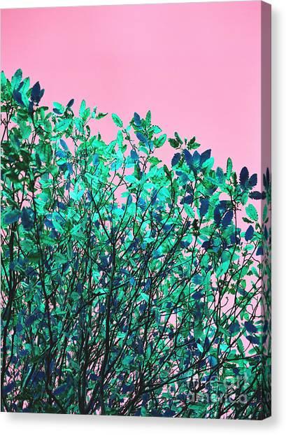 Autumn Flames - Pink Canvas Print