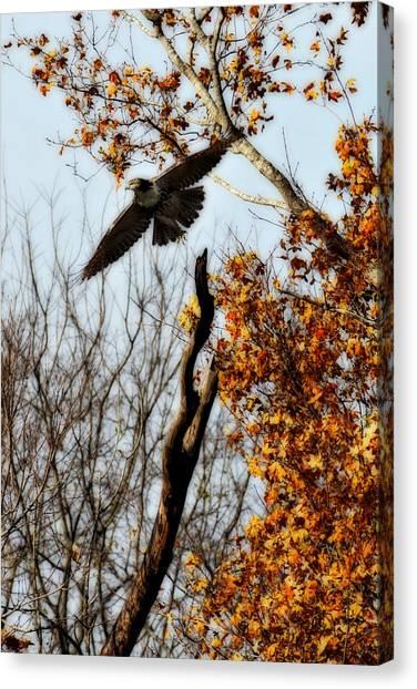 Autumn Flight Canvas Print by Alan Skonieczny