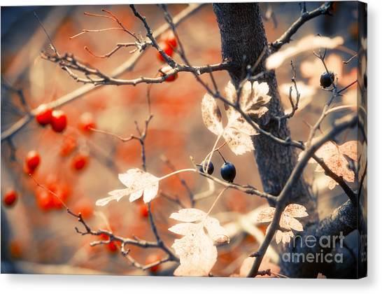 Autumn Forest Canvas Print by Konstantin Sevostyanov