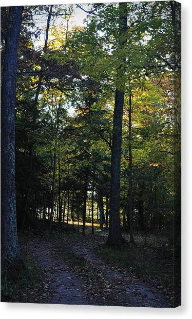 Autumn Glen Canvas Print