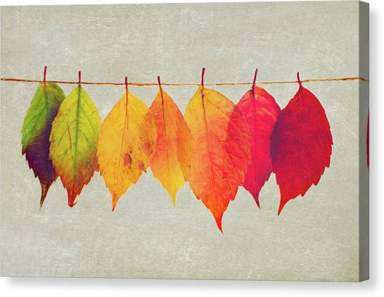 Canvas Print - Autumn Glory by Amanda Lakey