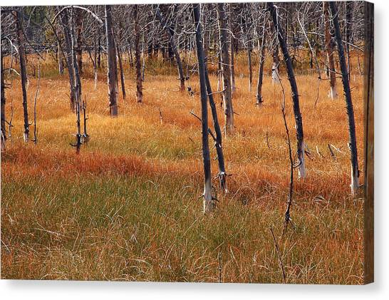 Autumn Grasses In Yellowstone Canvas Print