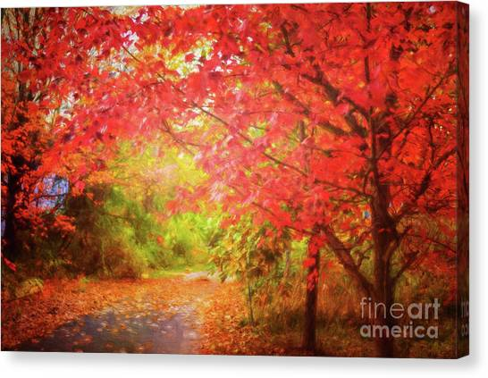 Glorious Foliage On The Rail Trail Canvas Print