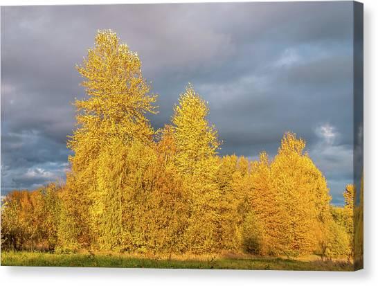 University Of Washington Canvas Print - Autumn Grove by Marv Vandehey