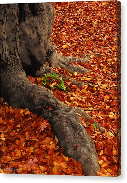 Forest Paths Canvas Print - Autumn Has Arrived by Garth Glazier