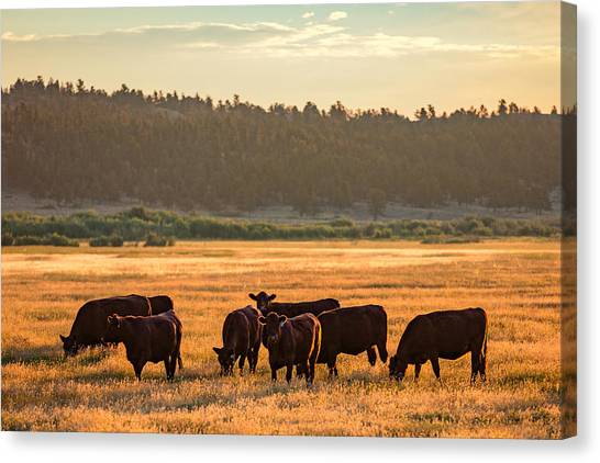 Mountain West Canvas Print - Autumn Herd by Todd Klassy