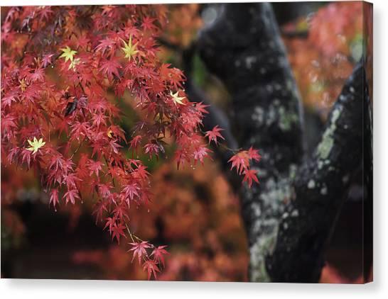 Japanese Canvas Print - Autumn by Hiro N
