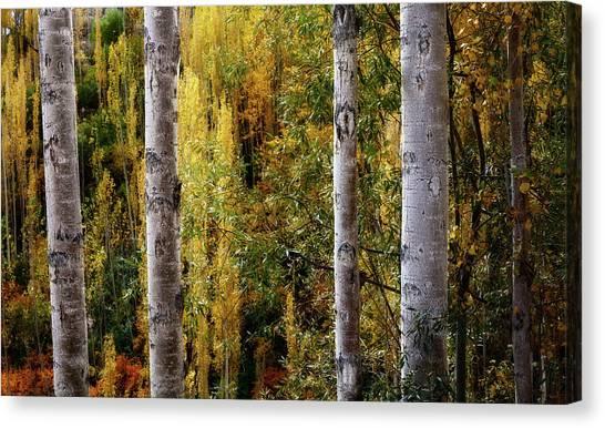 Autumn In A Jungle Canvas Print