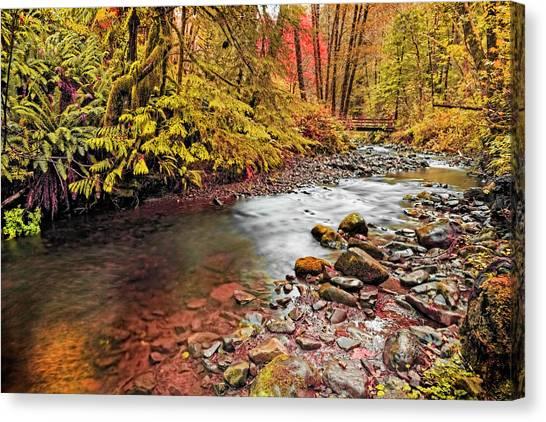 Autumn In An Oregon Rain Forest  Canvas Print
