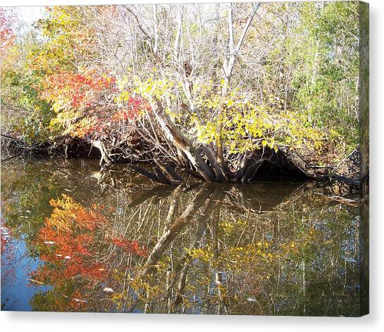 Autumn In Moyock Canvas Print