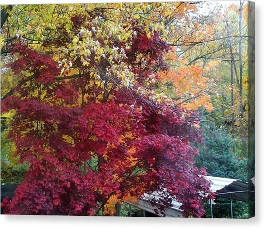 Autumn In October Canvas Print by Misty VanPool