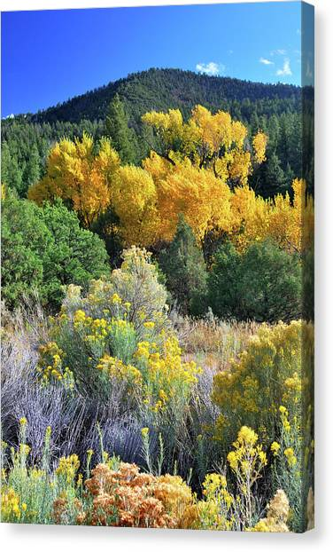 Autumn In The Canyon Canvas Print